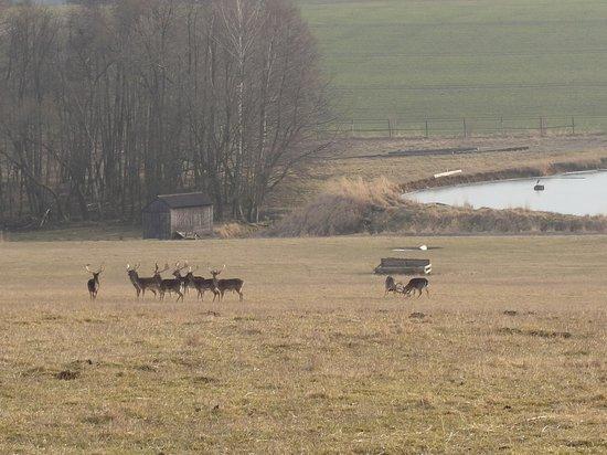 Wellness Hotel Diana : Fallow deers fighting
