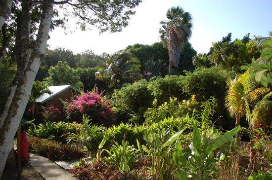 Au jardin des colibris : le jardin