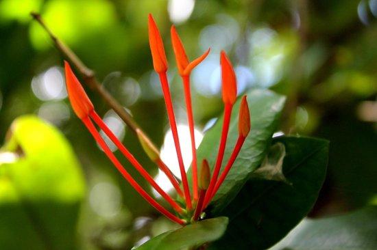 Veranda Palmar Beach: flower