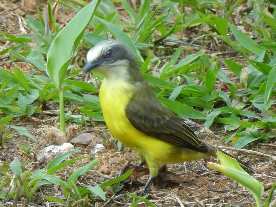 La Cacatua Lodge: Slower birds easier to photograph !