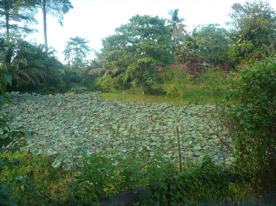 Sepilok Forest Edge Resort: The gardens