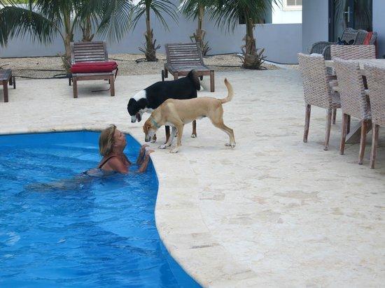 Oasis Guesthouse: Pool + twee lieve hondjes