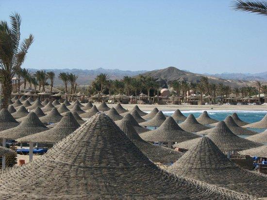 El Malikia Resort Abu Dabbab: The beautiful large beach and the beautiful coral reef.