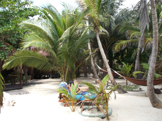 Little Corn Beach and Bungalow: restaurant amid palm trees