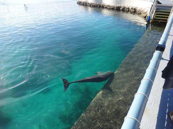 Dolphin Academy Curacao: Golfinho