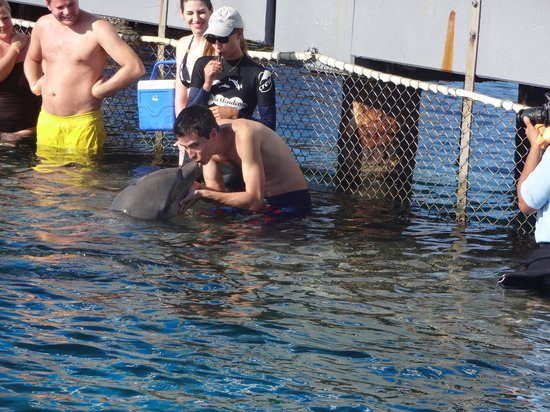 Dolphin Academy Curacao: Dolphin Encounter