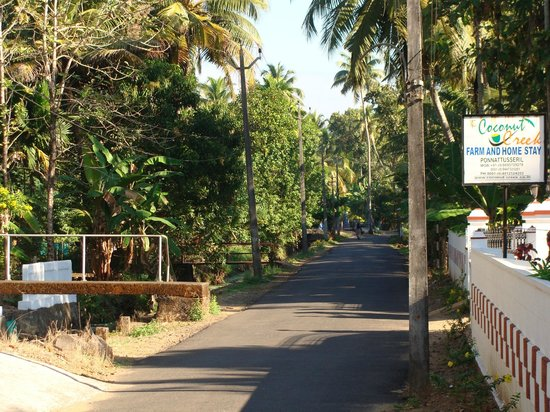 Coconut Creek Farm and Homestay: A nature's bliss.....Village lane outside the homestay