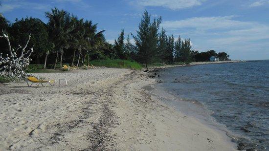 Iberostar Cozumel: EL agua no es transparente, turquesa ni se ven peces de colores a simple vista