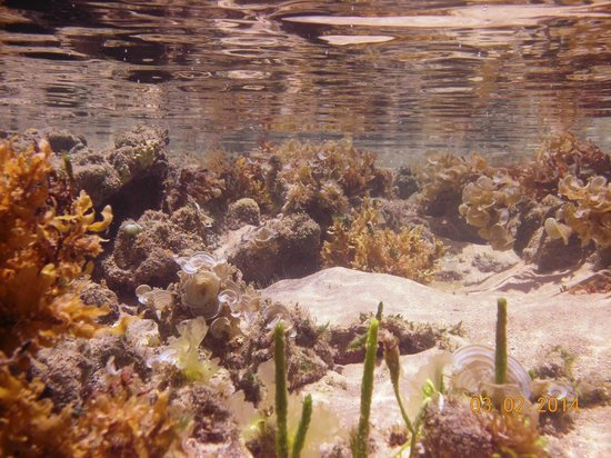 Pousada La Na Magia: Mucugê - maré baixa
