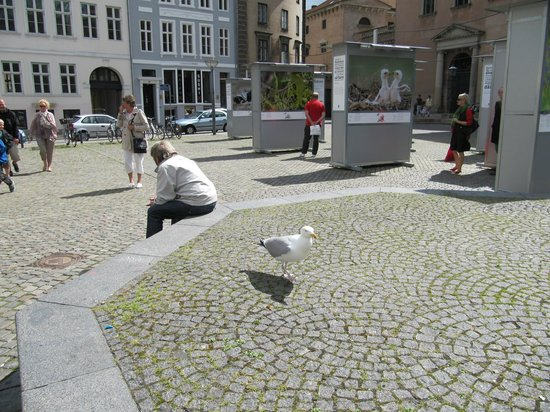 Copenhagen King's Square : площадь