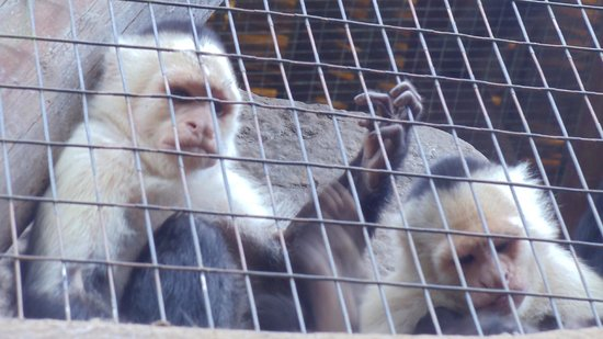 Go Tours Costa Rica - Day Tours: Monkeys at La Paz