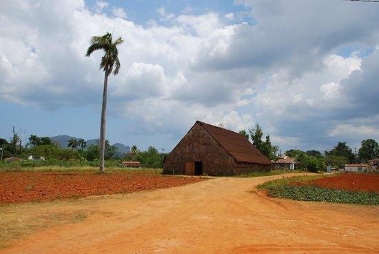 Valle de Vinales : Valle de Viñales - Tobacco farm