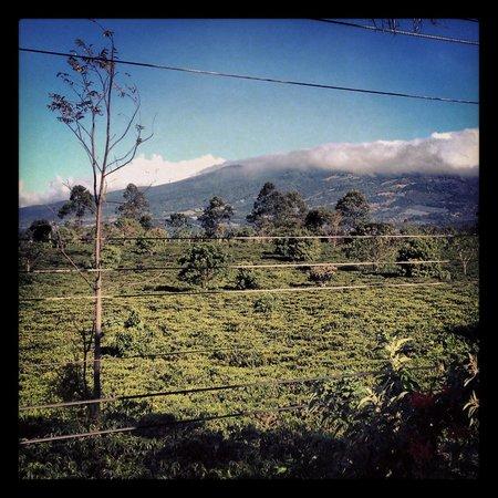 Pura Vida Retreat & Spa: The coffee plantation across the street as viewed from the dining hall.