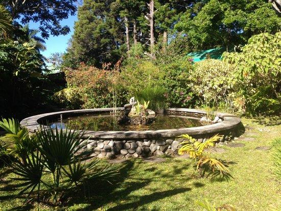 Pura Vida Retreat & Spa: The main fountain