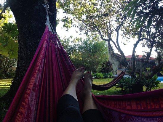 Pura Vida Retreat & Spa : The hammocks by the pool!