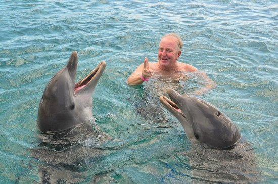 Dolphin Academy Curacao : Telling a funny story.