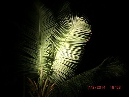 Diani Reef Beach Resort & Spa: The wonderful palms above you at night