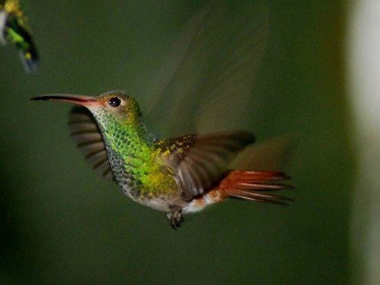 Feliciano Tours: lots of hummingbirds around