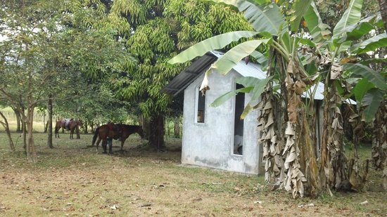 Feliciano Tours: our horses, waiting patiently for us