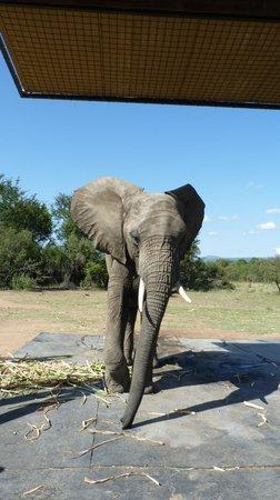 Adventures with Elephants : Elephant