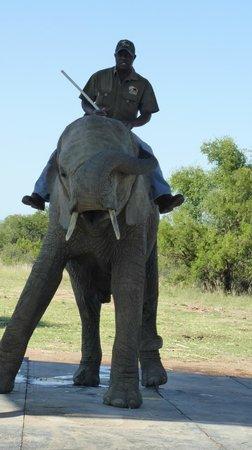 Adventures with Elephants: Elephant