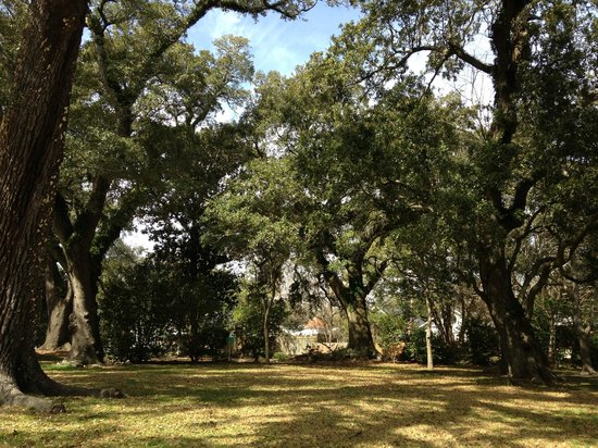 Historic Oakleigh House: Live oaks on the property.