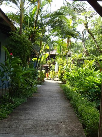 Tortuga Lodge & Gardens : grounds
