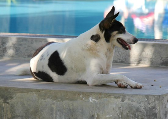 Shangri-Lanka Villa : Maisie!