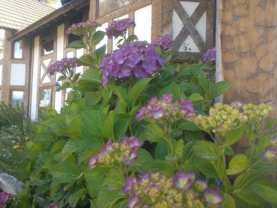 Naranjo en Flor Hosteria y Restaurant: Bajando a la Pileta