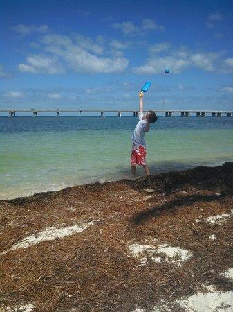 Bahia Honda State Park and Beach: Seaweed and more seaweed