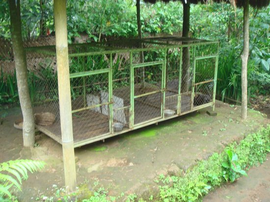 Satria Agrowisata: The cage where some of the civet cat lives