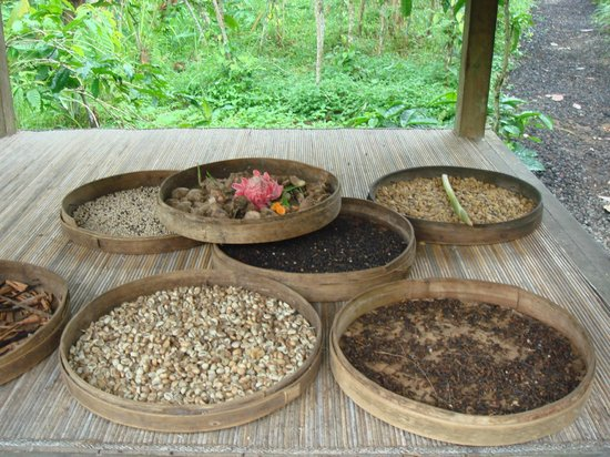 Satria Agrowisata: different ingredients of the coffee and drinks
