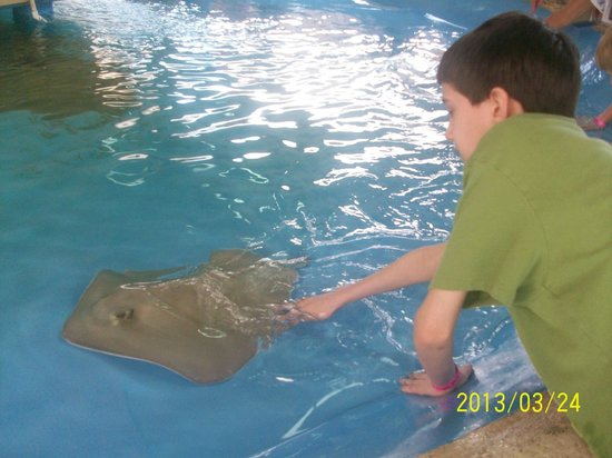 stingray exhibit at Golf World (about a mile down the road from Emerald Beach Resort)