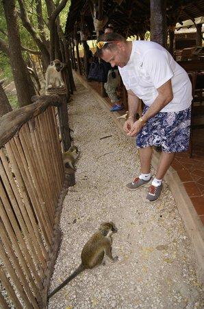 Reserve De Bandia: Małpy