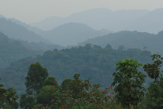 Amazing view from Silverback Lodge