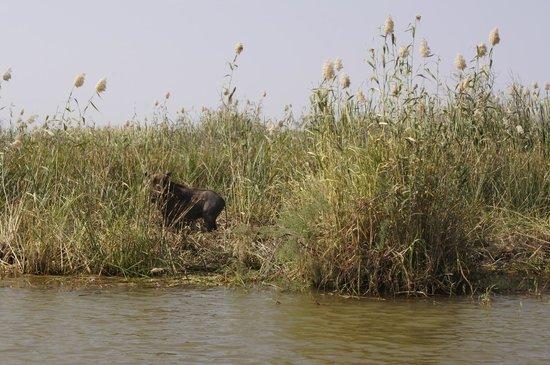 Djoudj National Bird Sanctuary: Guziec