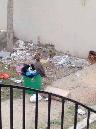 Mansea Beach Hotel: rubbish tip outside room complete with vultures