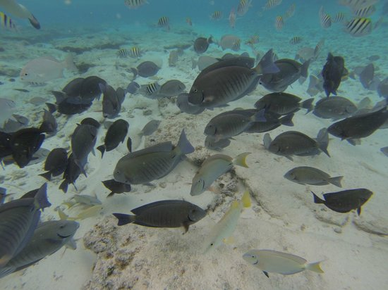 Decameron Marazul: nadar con peces