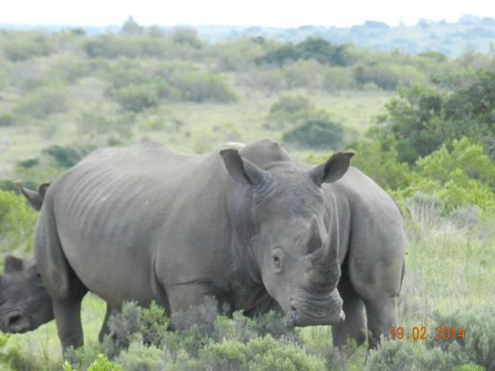 Kwantu Private Game Reserve - Day Visits: 1 of the big 5