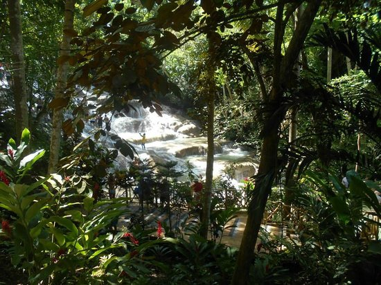 Dunn's River Falls and Park: One part of the falls, its so big it won't fit in one pic!