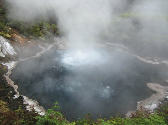 Waikite Valley Thermal Pools: The spring that all the water for the pools come from