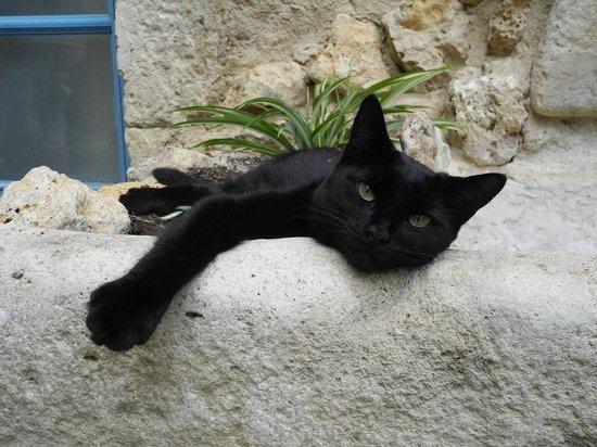 Chateau de Murviel : le chat