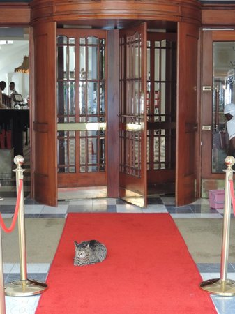The Oyster Box : The regal welcome by Scabanga Cat at the entrance