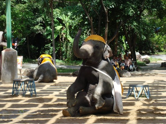 Samutprakan Crocodile Farm and Zoo : elephant show