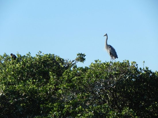 Everglades Adventure: The rookery on the pontoon ride