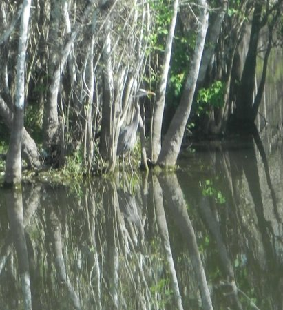Everglades Adventure: A heron in the trees on the nature drive