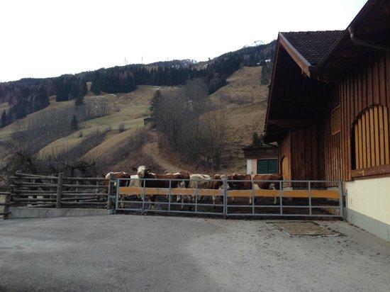 Amosergut: the farm next door