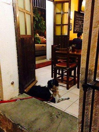 Trattoria y Pizzeria Ciao Italia: Visitante VIP espera paciente en la puerta a sus dueños.