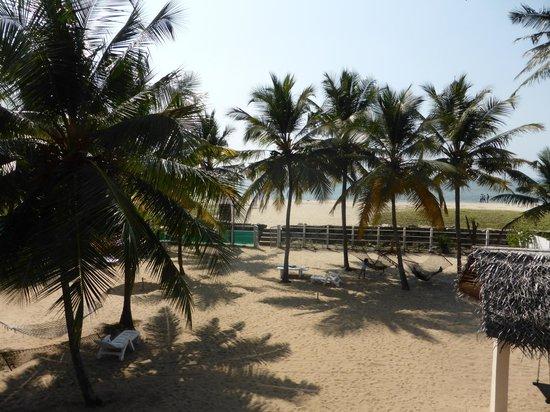 Alleppey Beach Resorts: Hotellträdgården