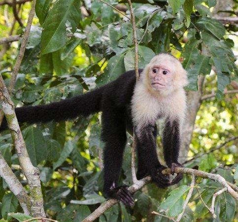 Arenas del Mar Beachfront and Rainforest Resort, Manuel Antonio, Costa Rica: Manuel Antonio National Park